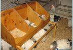 Att bygga ett träskjul med sina händer