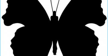 Fjärilar på väggen i det inre av lägenheten