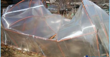 Växthus av polykarbonat med sina händer