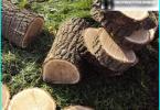 Lawn Care: kamning, luftning, gödsling, marktäckning, klippning