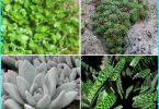 Växthus Polykarbonat egna händer: self-made ram för polykarbonat