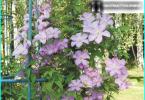 Hur man väljer tvåhjulstraktor för trädgården: en maskin bättre?